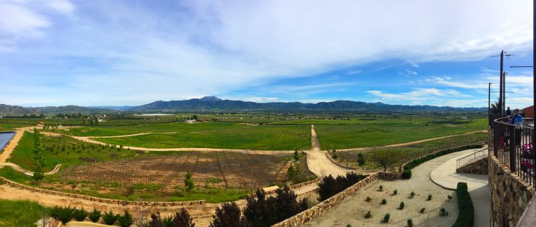 Visiting Vineyards in Valle de Guadalupe