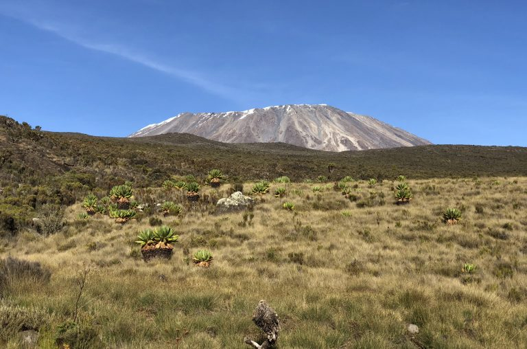 Climbing Mt. Kilimanjaro: 6-Day Rongai Route