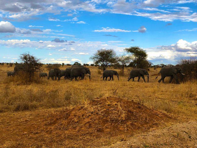 A 4-Day Tanzanian Safari
